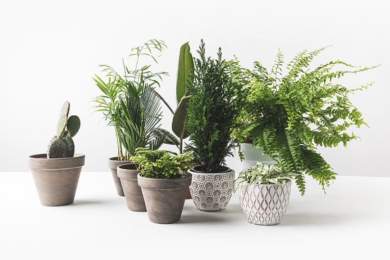 Plants sold online